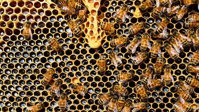 Honing afhaalpunt Natuurpunt & Partners Meetjesland